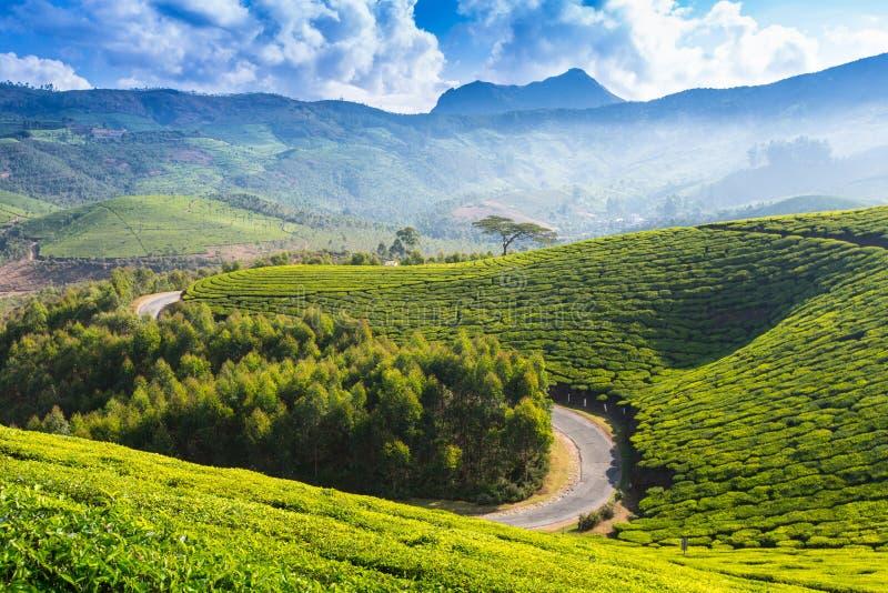 Estrada em plantações de chá fotos de stock