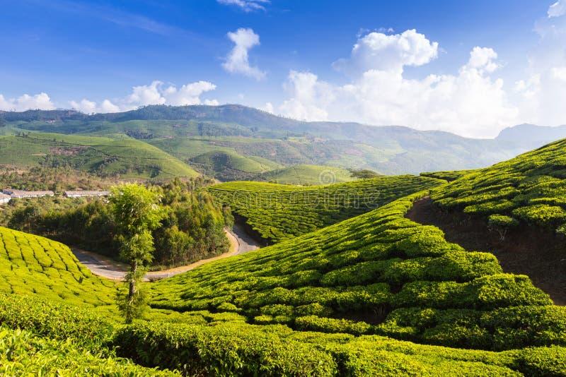Estrada em plantações de chá imagens de stock royalty free