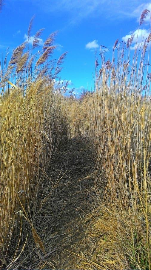 Estrada em um campo com grama alta Fuga no campo fotos de stock royalty free
