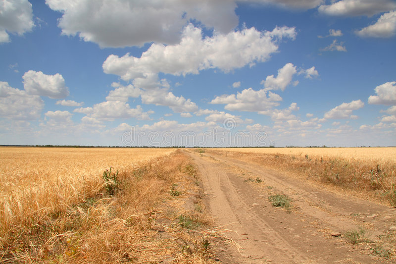 Estrada em um campo de trigo foto de stock royalty free