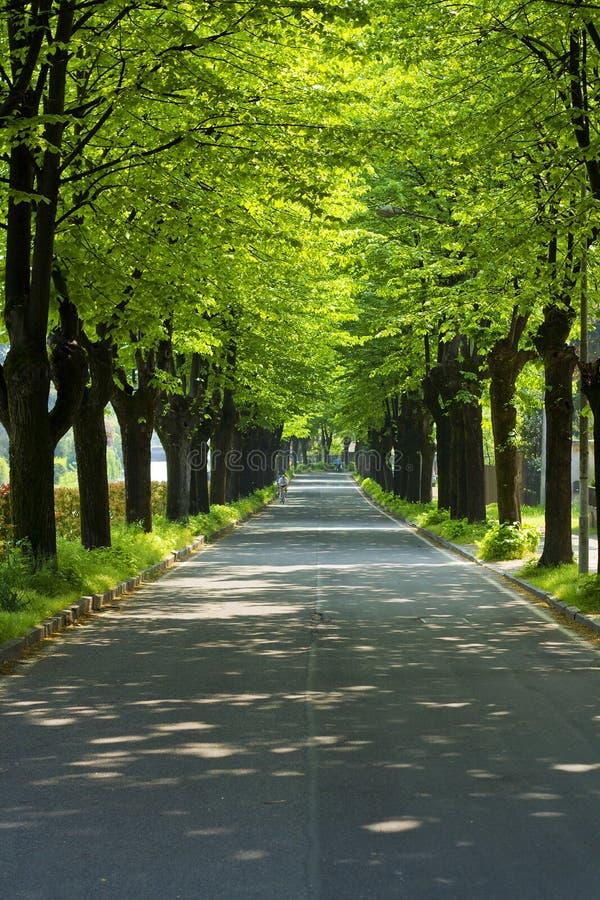 Estrada em um parque com fileira das árvores fotos de stock