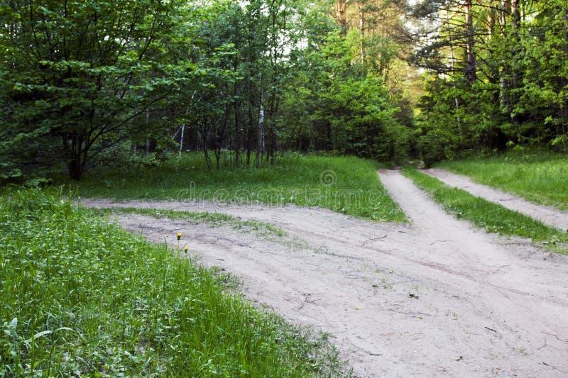 Estrada em uma madeira imagens de stock