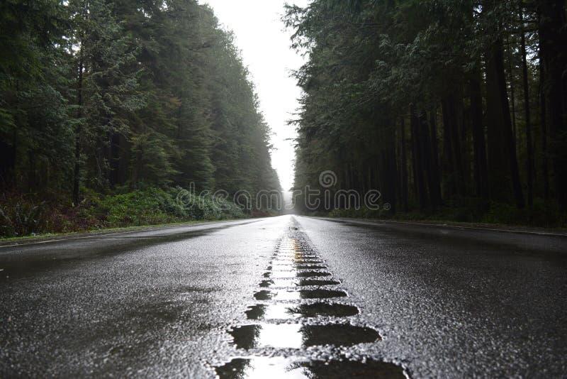 Estrada 101 em Washington State fotografia de stock