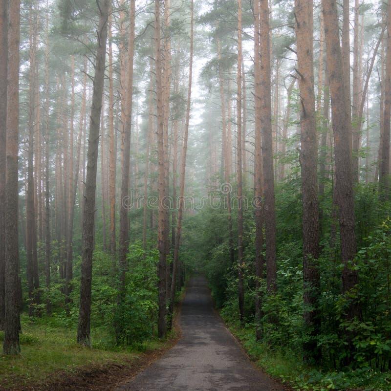Estrada enevoada da manhã fotografia de stock