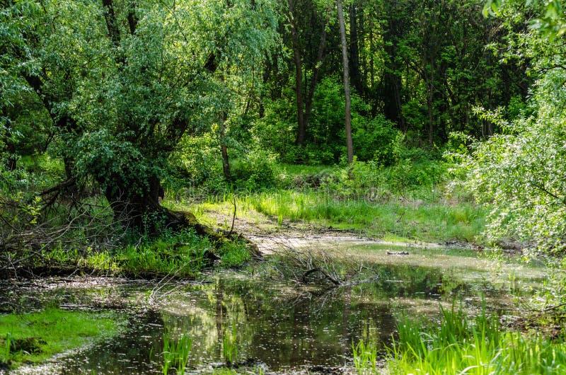 A estrada enlameada na floresta no Danube River imagem de stock