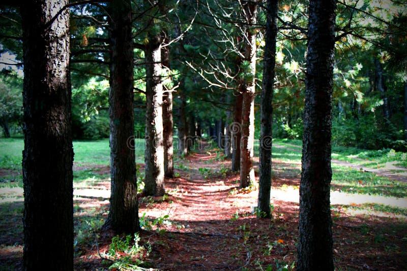 Estrada ensolarada do verão à floresta imagens de stock