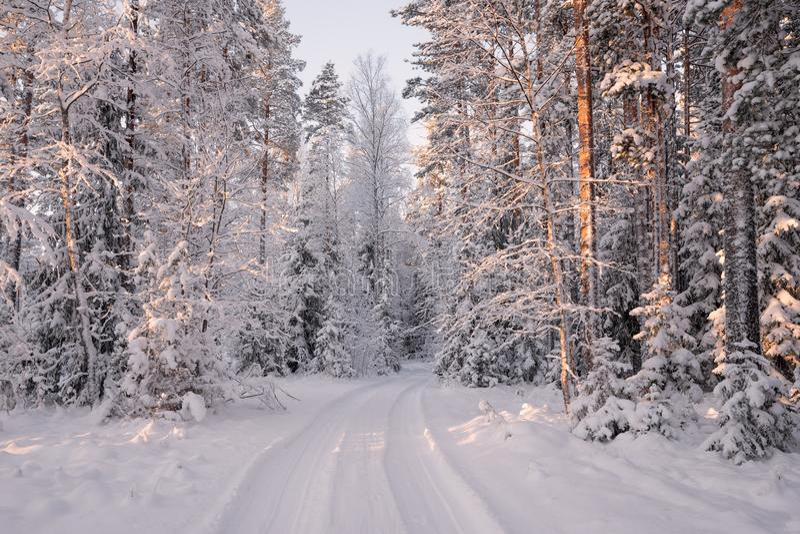 Estrada entre árvores cobertos de neve no inverno Forest Winter Forest Landscape Manhã bonita do inverno em uma frente coberto de foto de stock