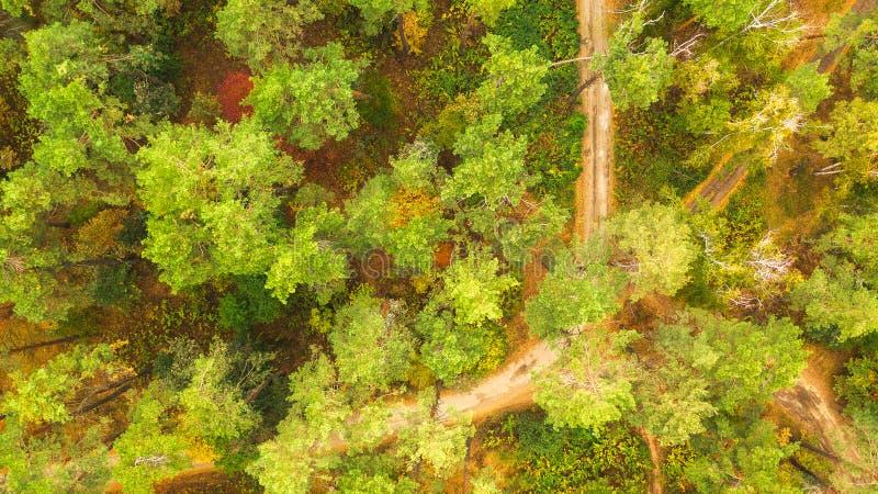Estrada entre as árvores na floresta do outono imagens de stock