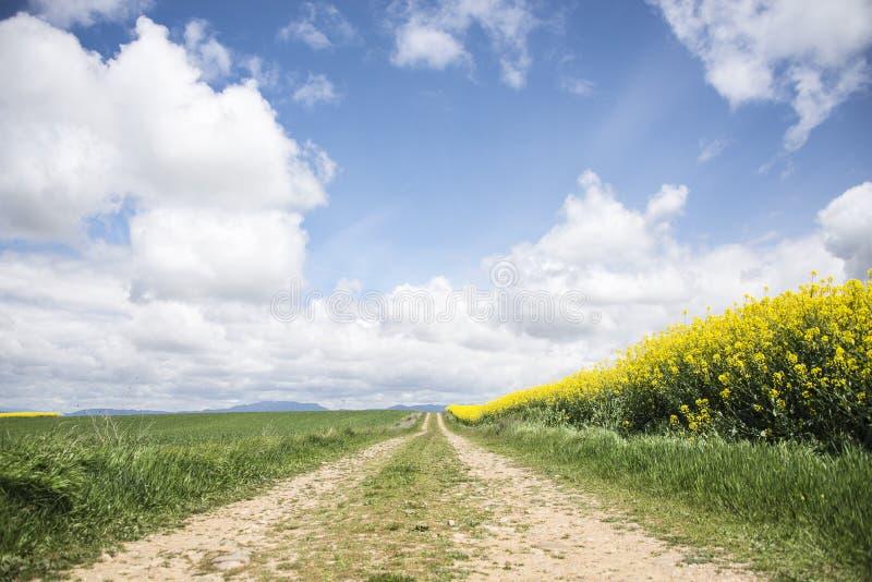 Estrada entre campos da colza sob as nuvens imagens de stock royalty free