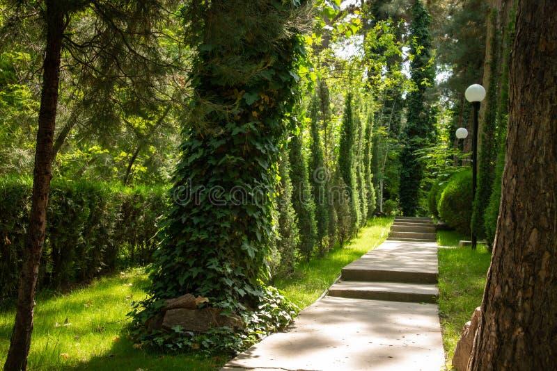 A estrada está na floresta entre as árvores, iluminadas pelos raios do sol Fundo imagens de stock