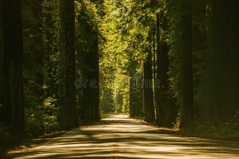 Estrada gigante das árvores da sequoia vermelha imagens de stock royalty free