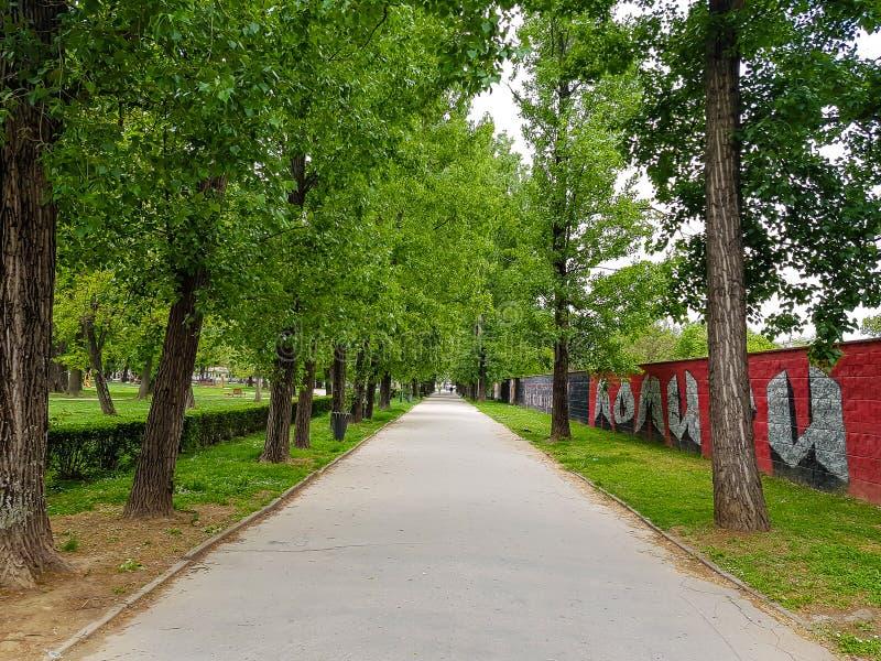Estrada grande com a fileira das árvores no parque da cidade fotografia de stock