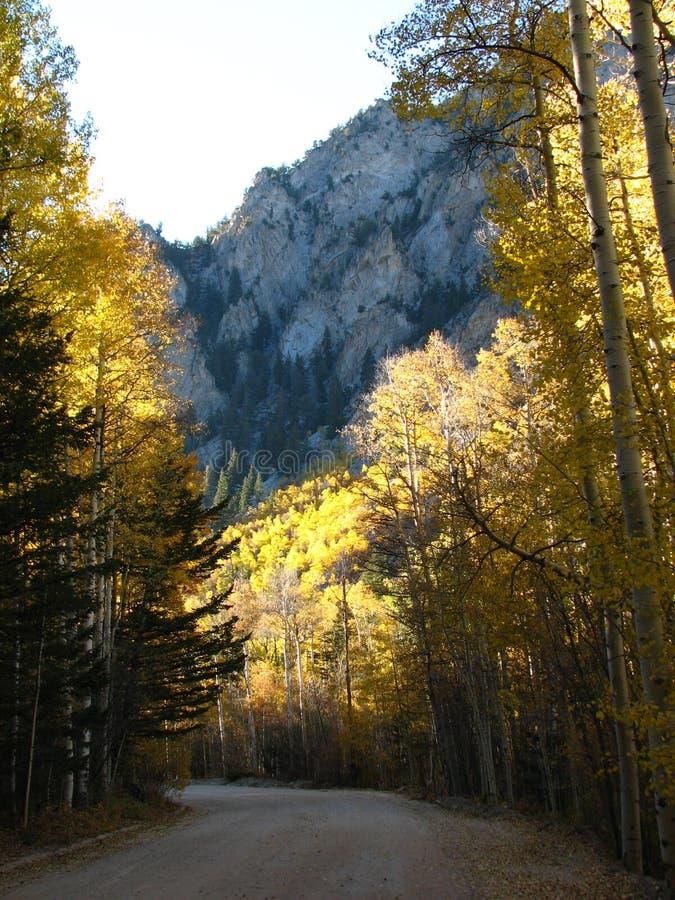 Estrada II do bosque de Aspen imagem de stock royalty free