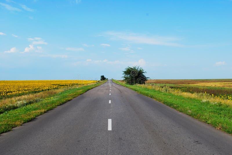 Estrada infinita através de um prado de florescência em um dia ensolarado fotografia de stock