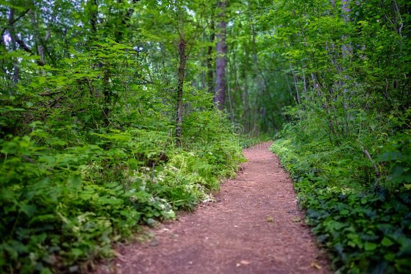 Estrada místico na floresta 2 imagens de stock royalty free