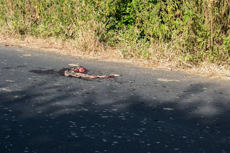 A estrada matou a víbora de Russels da serpente foto de stock