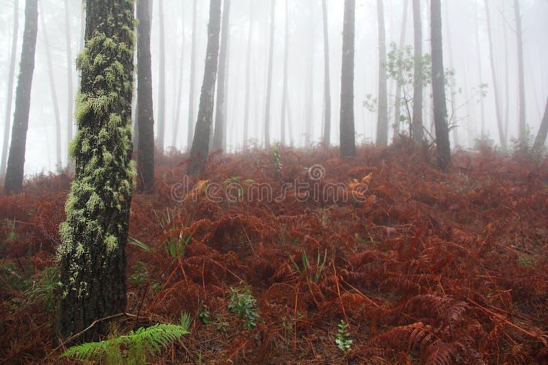 Estrada, névoa, floresta, Portugal imagens de stock