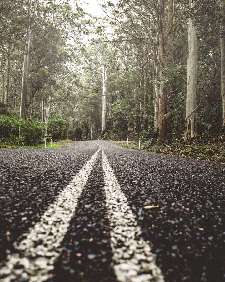 Estrada na floresta úmida fotos de stock royalty free