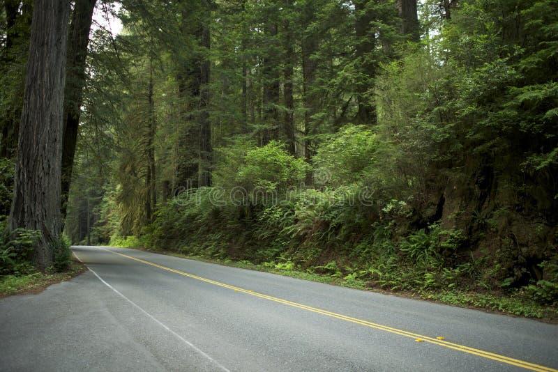 Estrada na floresta da sequoia vermelha fotografia de stock royalty free