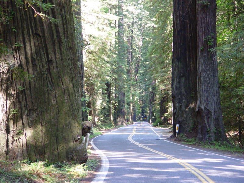 Estrada 101 na floresta da sequoia vermelha de Califórnia imagem de stock