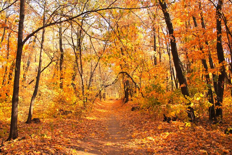 Estrada na floresta do outono fotos de stock royalty free