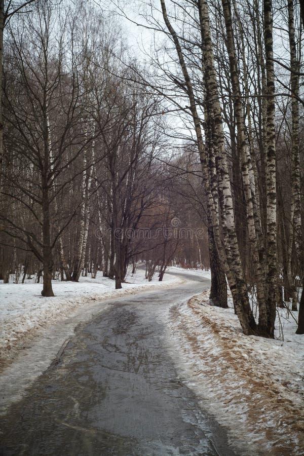 A estrada na floresta do vidoeiro na mola imagens de stock royalty free