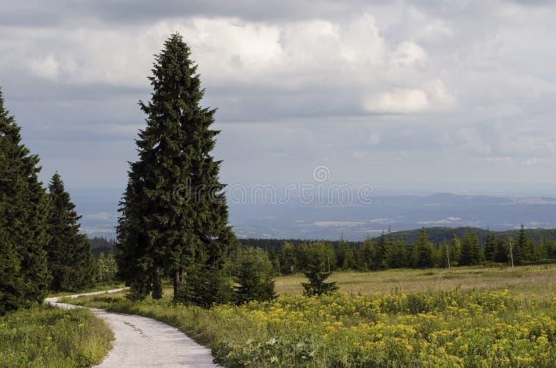 Estrada na floresta dos abetos imagem de stock royalty free