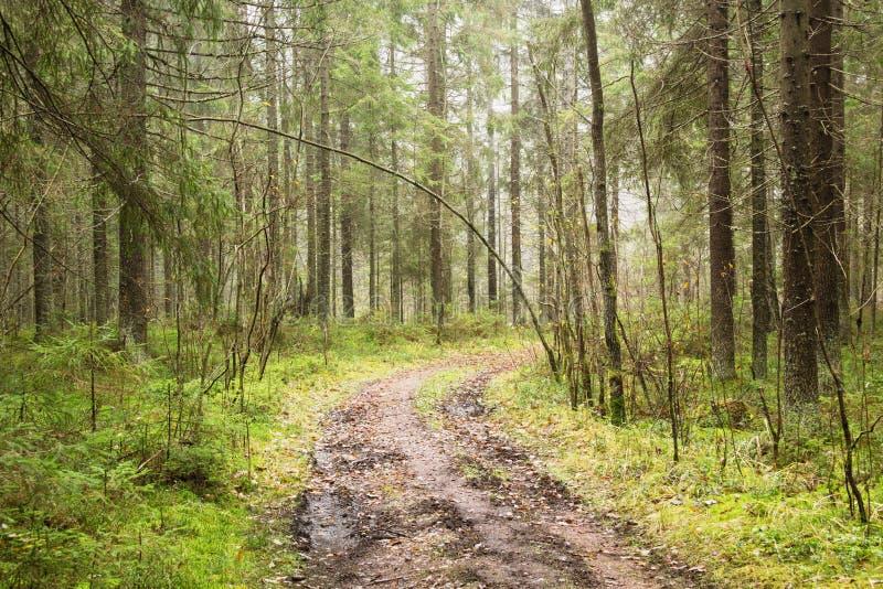 Estrada na floresta em novembro imagens de stock royalty free