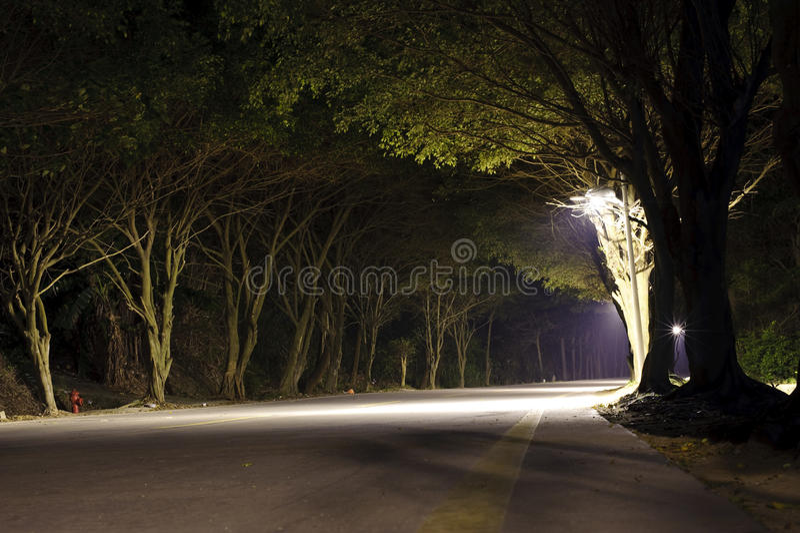 Estrada na floresta escura imagens de stock