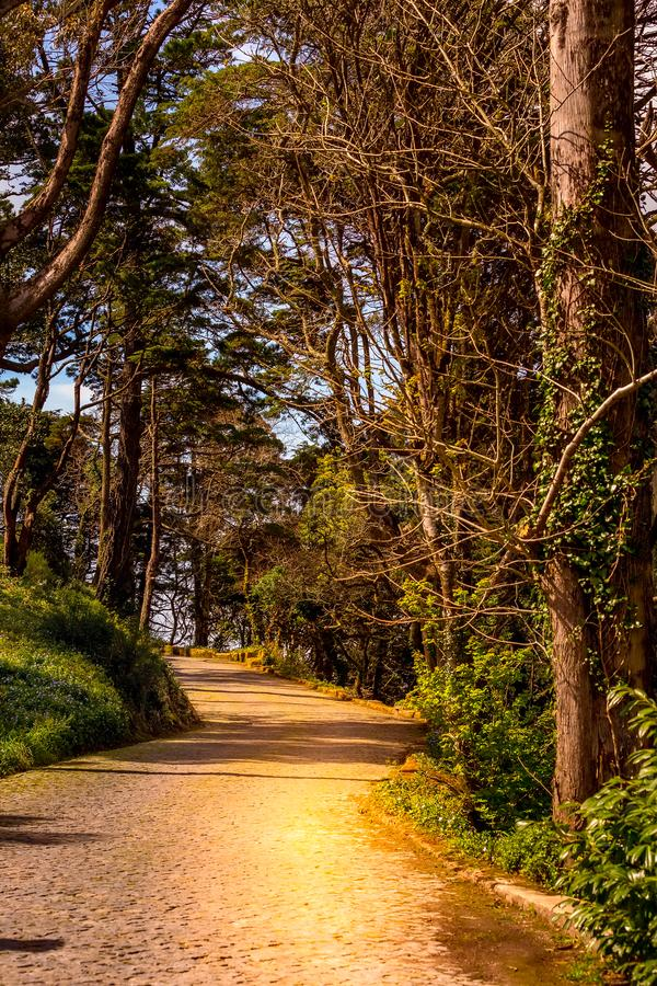 Estrada na floresta escura mágica imagem de stock