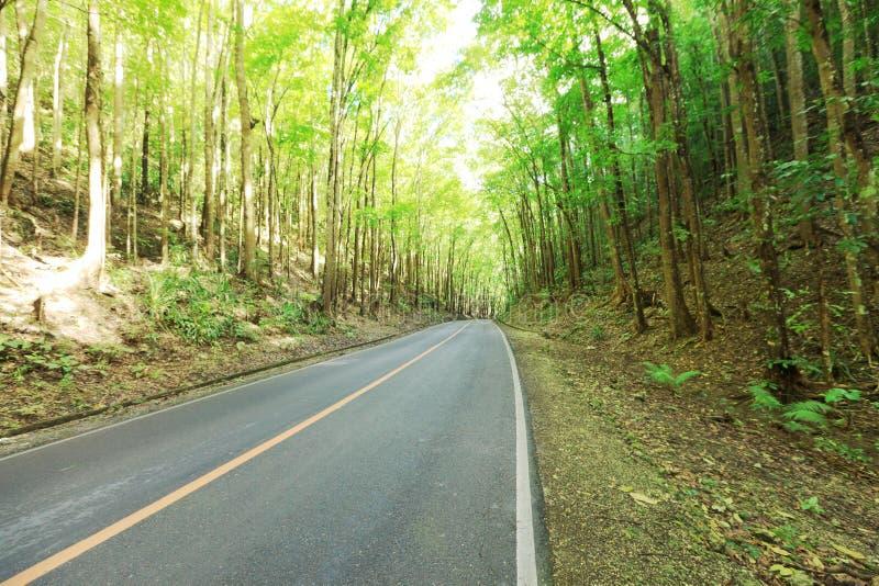 Estrada na floresta húmida tropical foto de stock