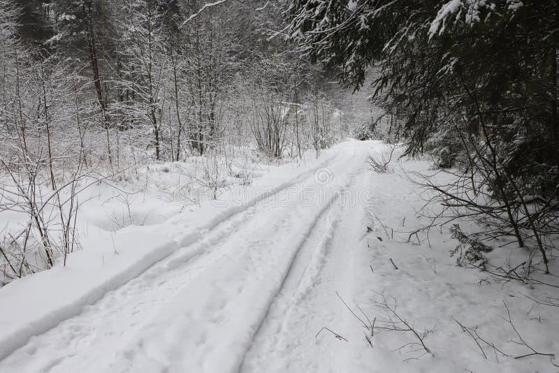 Estrada na floresta nevado imagens de stock royalty free