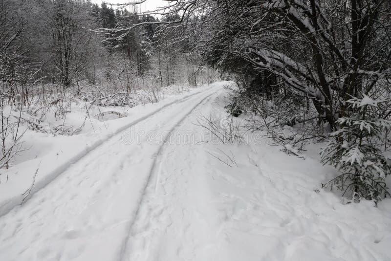 Estrada na floresta nevado fotografia de stock