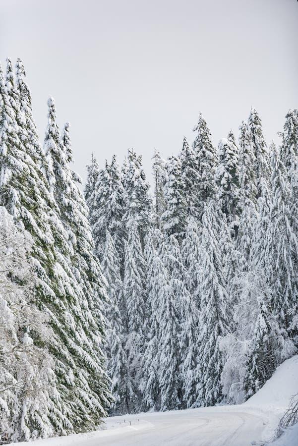 Estrada na floresta no inverno fotografia de stock
