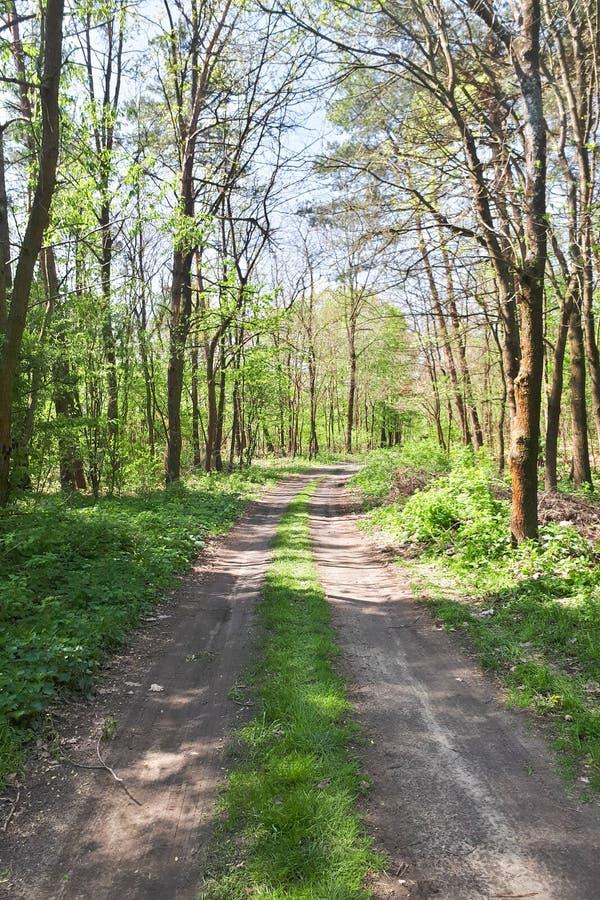 Estrada na floresta no tempo de mola fotografia de stock