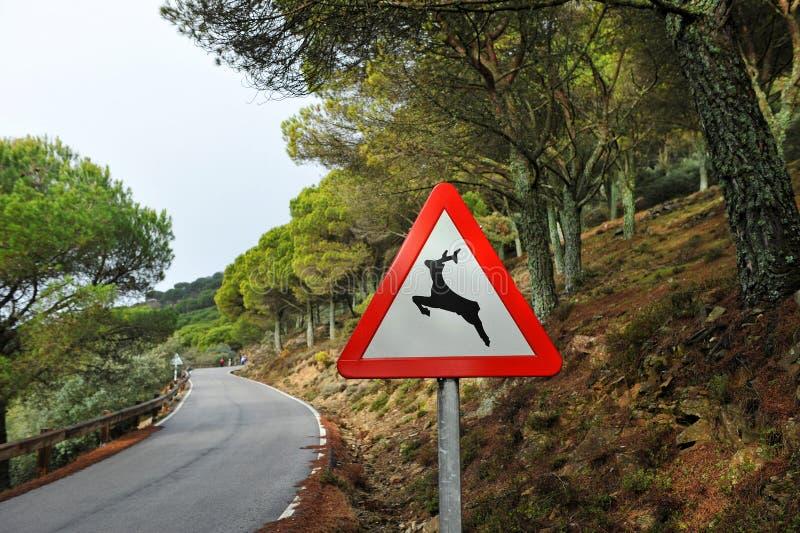 Estrada na floresta, sinal de estrada do perigo, animais selvagens imagens de stock royalty free