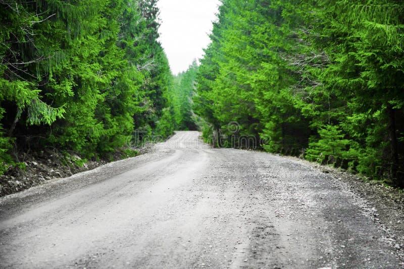 Estrada na floresta verde da árvore de abeto fotos de stock royalty free