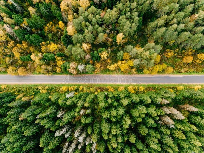 Estrada na opinião aérea da floresta do outono foto de stock royalty free