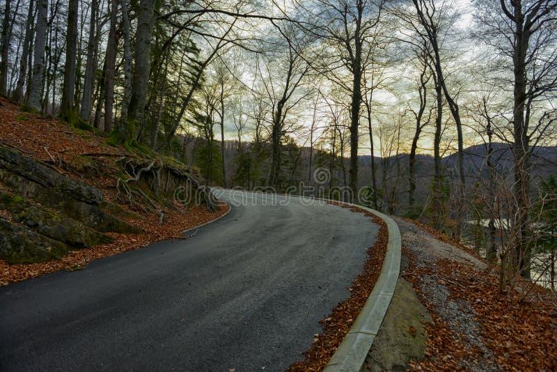 Estrada na paisagem da floresta do outono imagem de stock royalty free