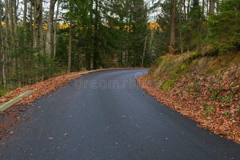 Estrada na paisagem da floresta do outono fotografia de stock