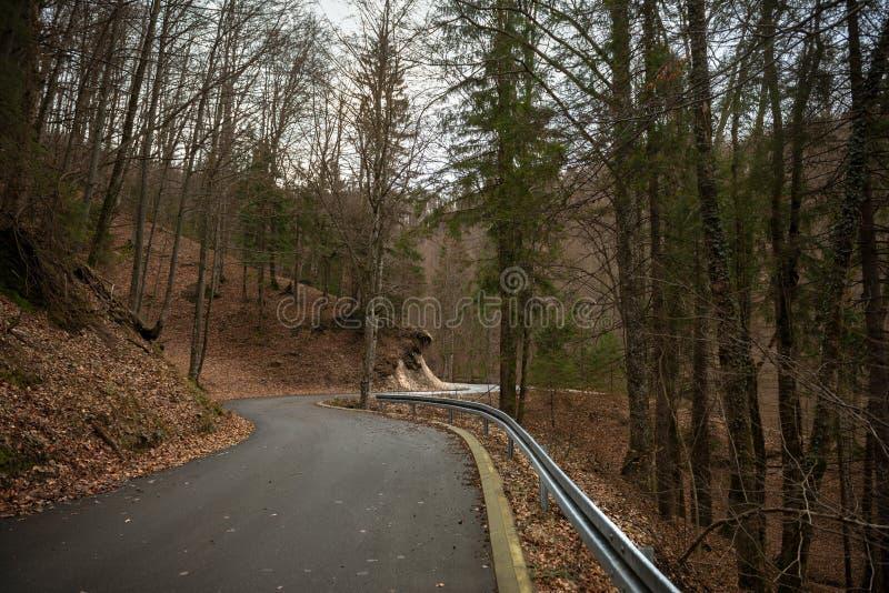 Estrada na paisagem da floresta do outono fotografia de stock royalty free