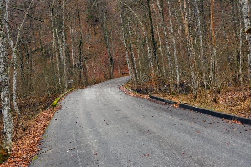 Estrada na paisagem da floresta do outono foto de stock royalty free