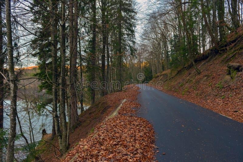 Estrada na paisagem da floresta do outono imagens de stock royalty free