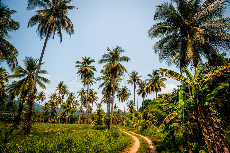 A estrada na selva imagens de stock royalty free