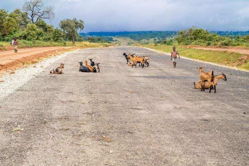 Estrada na Zâmbia imagem de stock