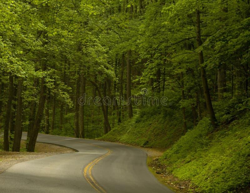 Estrada nas madeiras fotos de stock