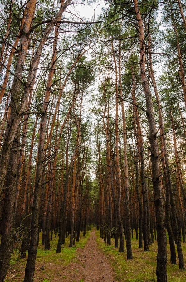 Estrada nas profundidades da floresta foto de stock royalty free