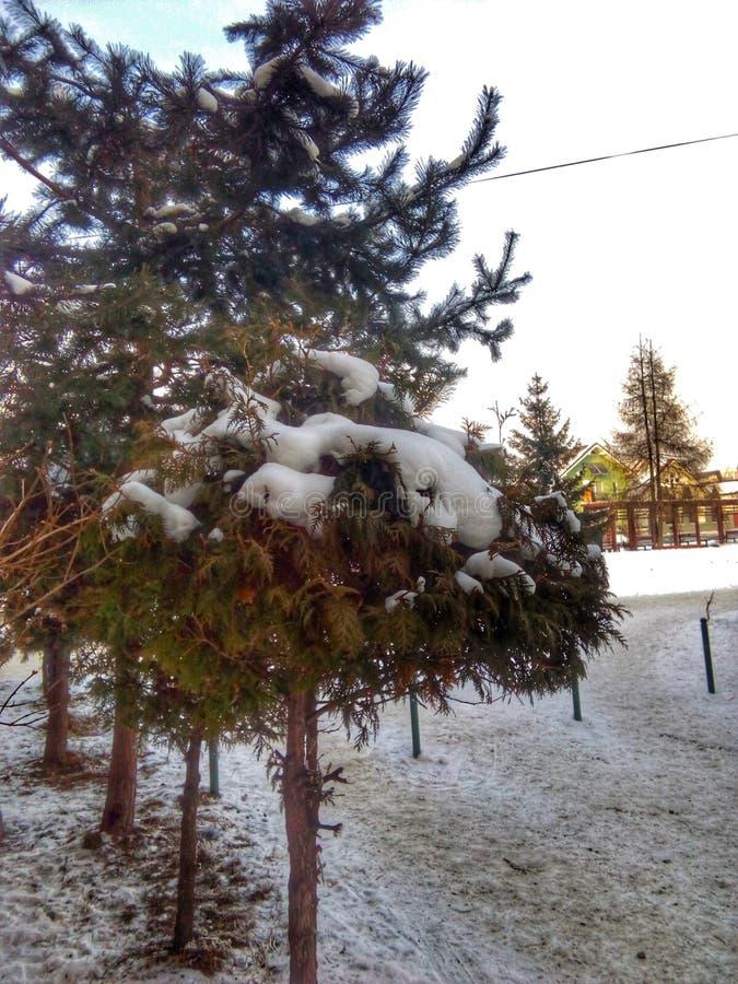 Estrada nevado, árvores e neve no inverno foto de stock