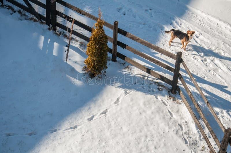 Estrada nevado com um cão disperso fotografia de stock royalty free