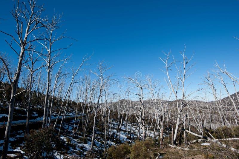 Estrada nevado das montanhas imagem de stock